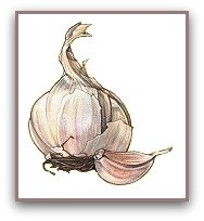 healthy foods list garlic